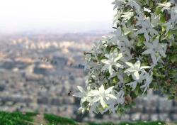 دمشق في زمن الحصرم