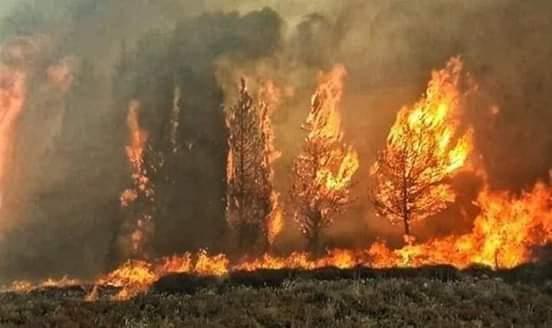 لماذا يحترق الساحل؟